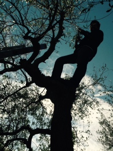 Here I am picking up in a tree...