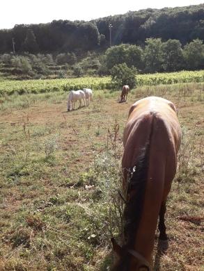 Horses at Ebbio.